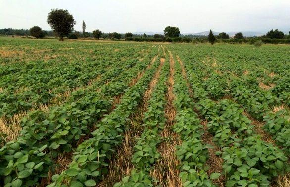 نبض بیمه+بیمه محصولات کشاورزی